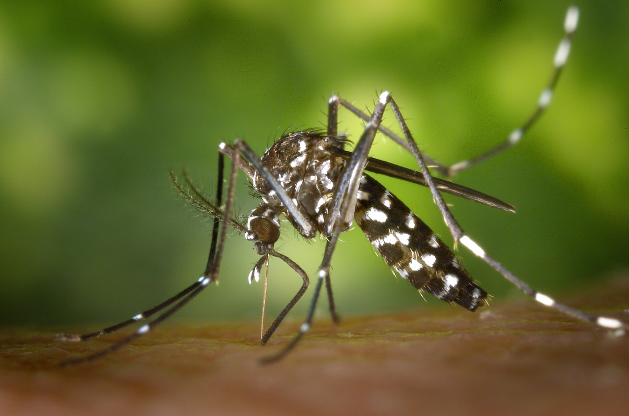 DEET is a powerful insect repellent common when you travel in Asia